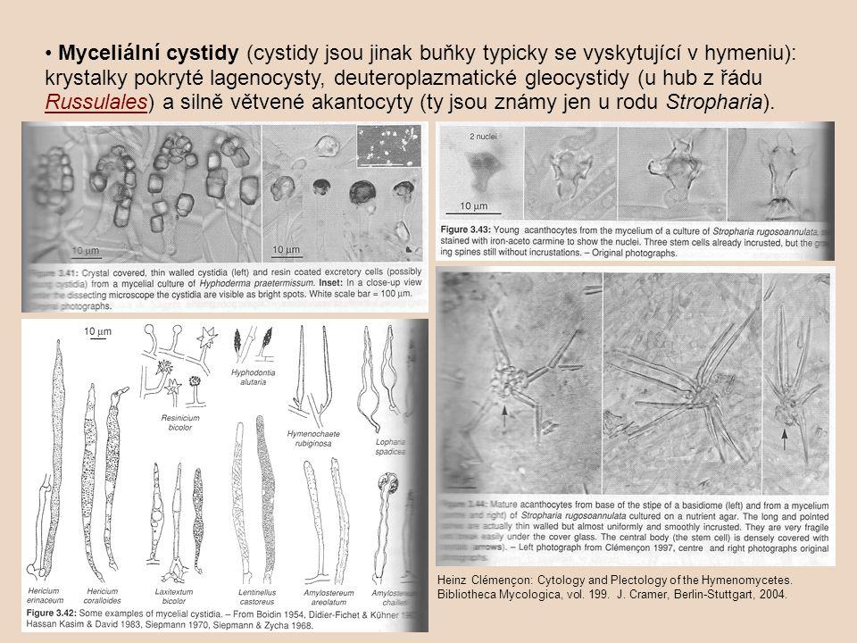 Myceliální cystidy (cystidy jsou jinak buňky typicky se vyskytující v hymeniu): krystalky pokryté lagenocysty, deuteroplazmatické gleocystidy (u hub z