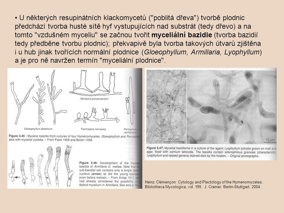 U některých resupinátních klackomycetů ( poblitá dřeva ) tvorbě plodnic předchází tvorba husté sítě hyf vystupujících nad substrát (tedy dřevo) a na tomto vzdušném myceliu se začnou tvořit myceliální bazidie (tvorba bazidií tedy předběne tvorbu plodnic); překvapivě byla tvorba takových útvarů zjištěna i u hub jinak tvořících normální plodnice (Gloeophyllum, Armillaria, Lyophyllum) a je pro ně navržen termín myceliální plodnice .