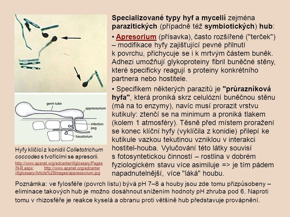 Specializované typy hyf a mycelií zejména parazitických (případně též symbiotických) hub: Apresorium (přísavka), často rozšířené ( terček ) – modifikace hyfy zajišťující pevné přilnutí k povrchu, přichycuje se i k mrtvým částem buněk.