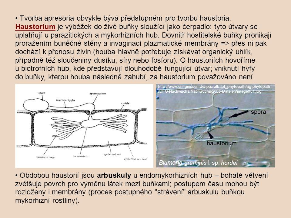 Tvorba apresoria obvykle bývá předstupněm pro tvorbu haustoria. HaustoriumHaustorium je výběžek do živé buňky sloužící jako čerpadlo; tyto útvary se u