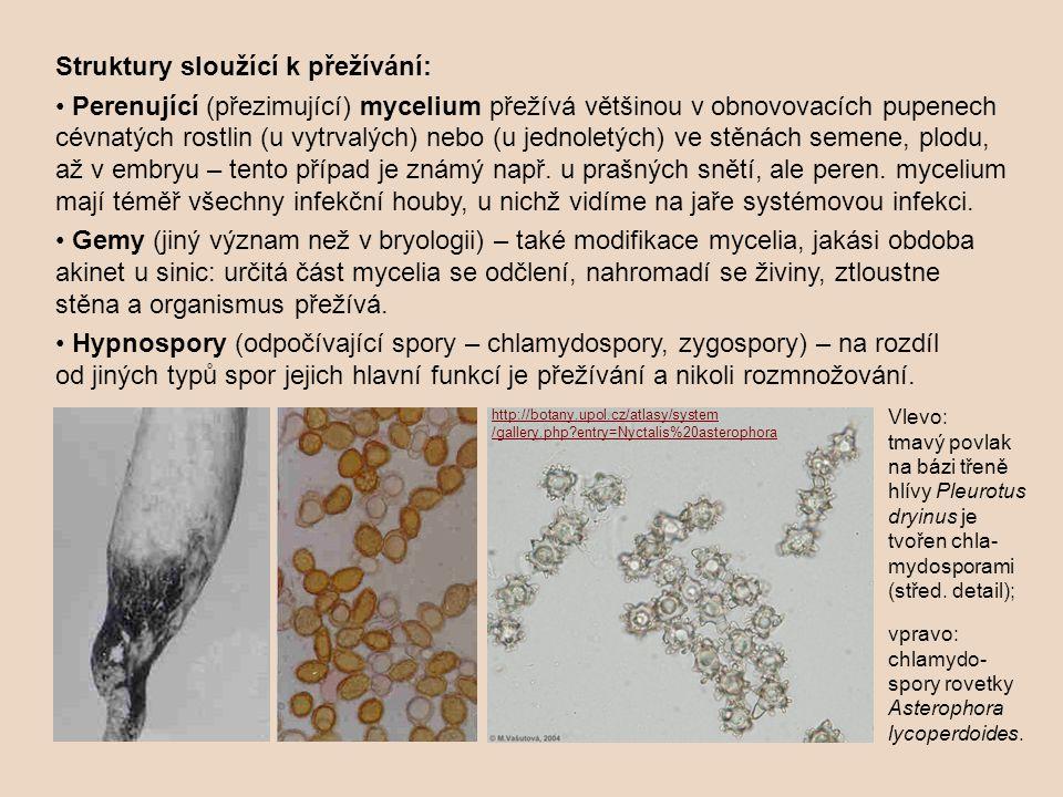 Struktury sloužící k přežívání: Perenující (přezimující) mycelium přežívá většinou v obnovovacích pupenech cévnatých rostlin (u vytrvalých) nebo (u jednoletých) ve stěnách semene, plodu, až v embryu – tento případ je známý např.