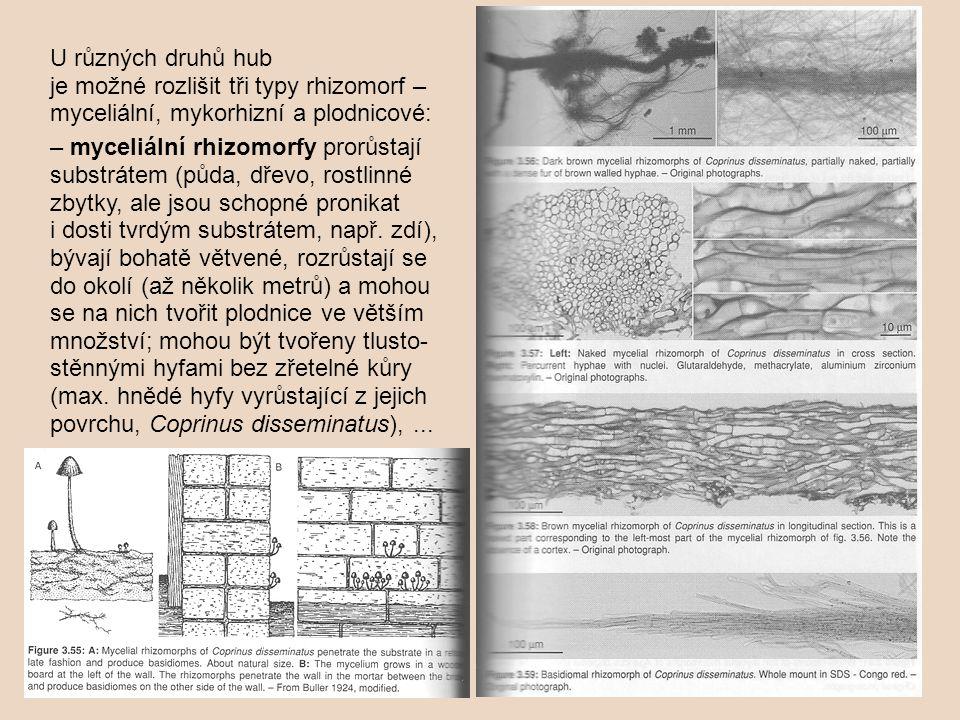 U různých druhů hub je možné rozlišit tři typy rhizomorf – myceliální, mykorhizní a plodnicové: – myceliální rhizomorfy prorůstají substrátem (půda, d
