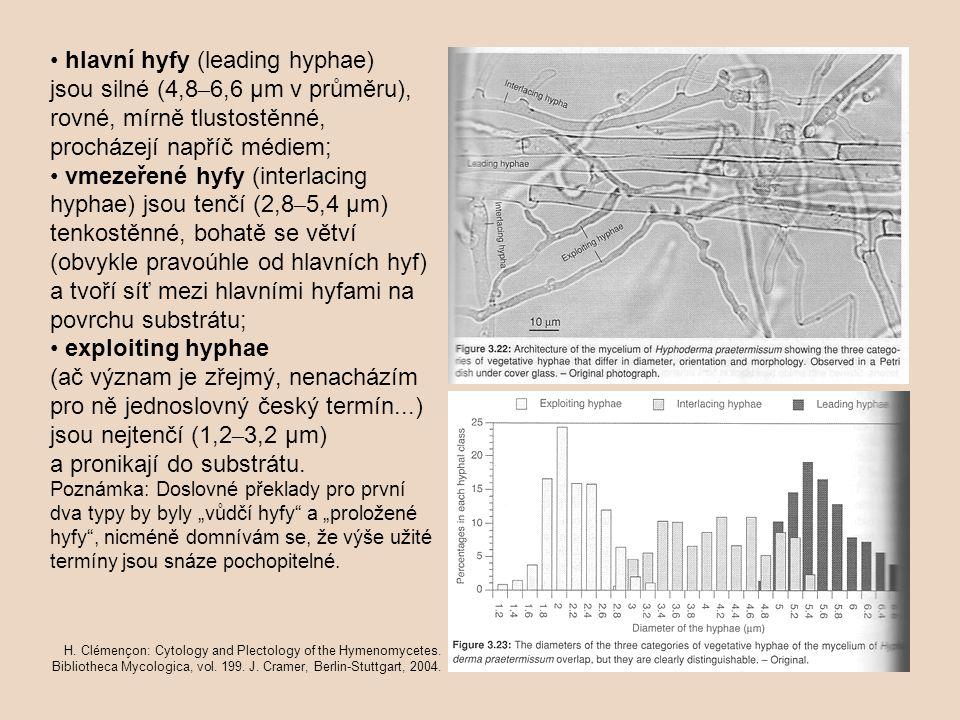 hlavní hyfy (leading hyphae) jsou silné (4,8 – 6,6 µm v průměru), rovné, mírně tlustostěnné, procházejí napříč médiem; vmezeřené hyfy (interlacing hyp