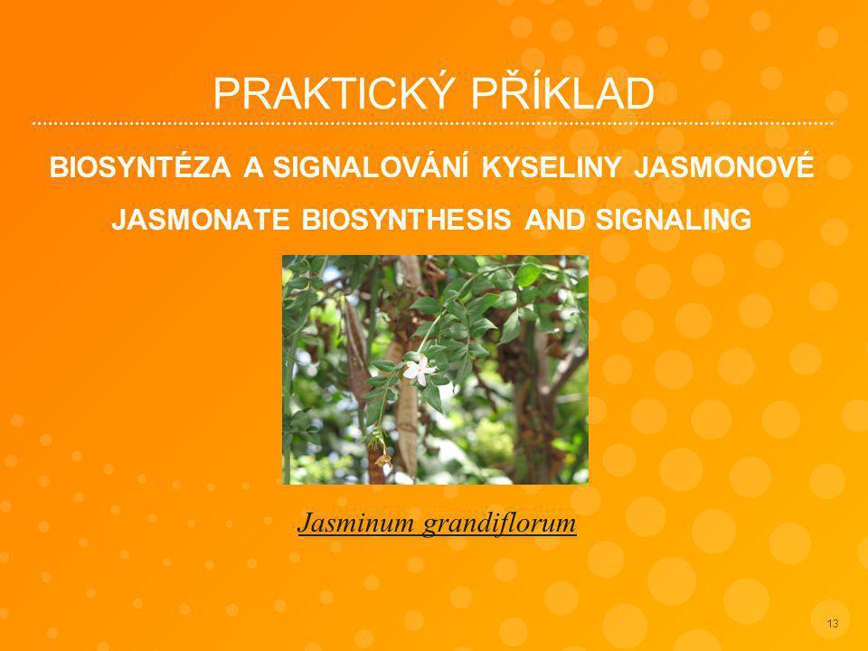 PRAKTICKÝ PŘÍKLAD BIOSYNTÉZA A SIGNALOVÁNÍ KYSELINY JASMONOVÉ JASMONATE BIOSYNTHESIS AND SIGNALING 13 Jasminum grandiflorum