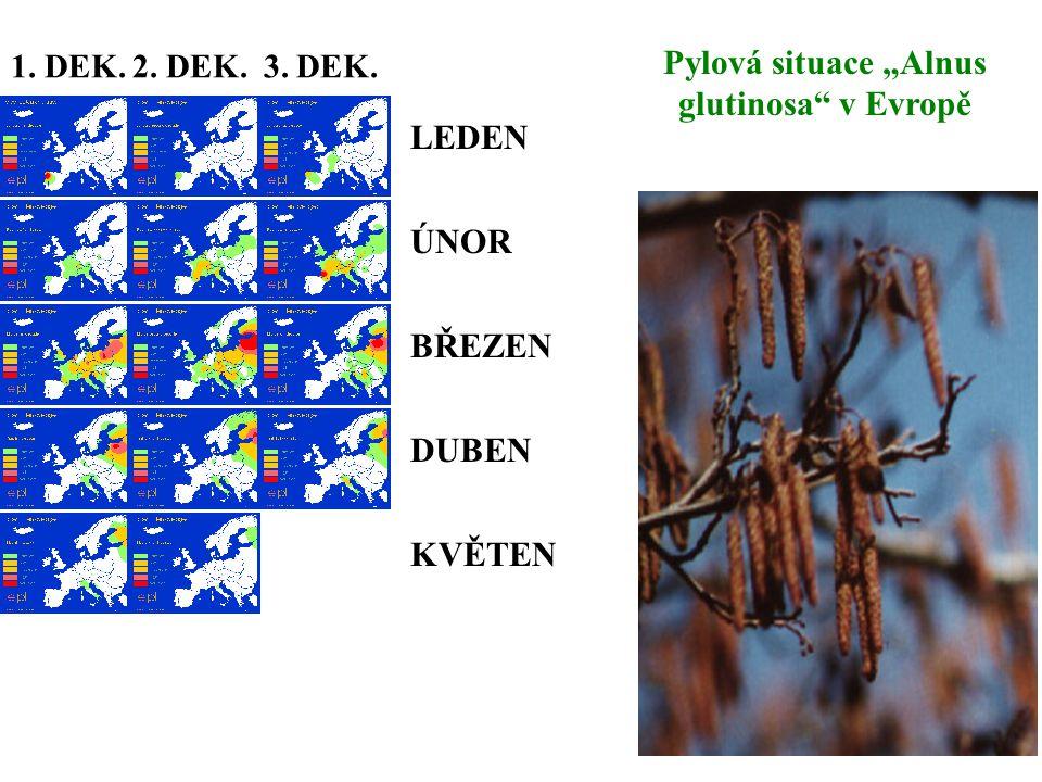 """LEDEN ÚNOR BŘEZEN DUBEN KVĚTEN 1. DEK. 2. DEK. 3. DEK. Pylová situace """"Alnus glutinosa"""" v Evropě"""