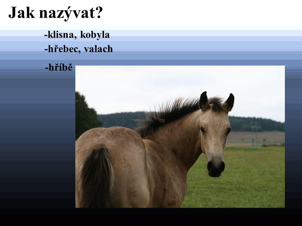 Jak nazývat? -klisna, kobyla -hřebec, valach -hříbě