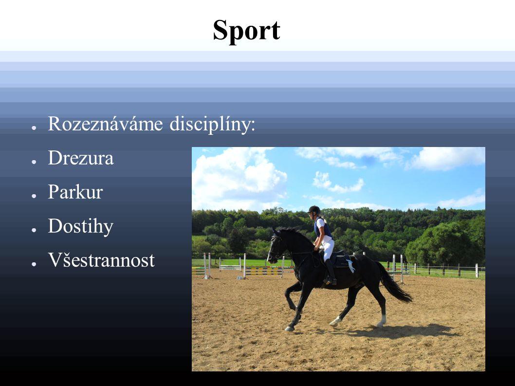 Sport ● Rozeznáváme disciplíny: ● Drezura ● Parkur ● Dostihy ● Všestrannost