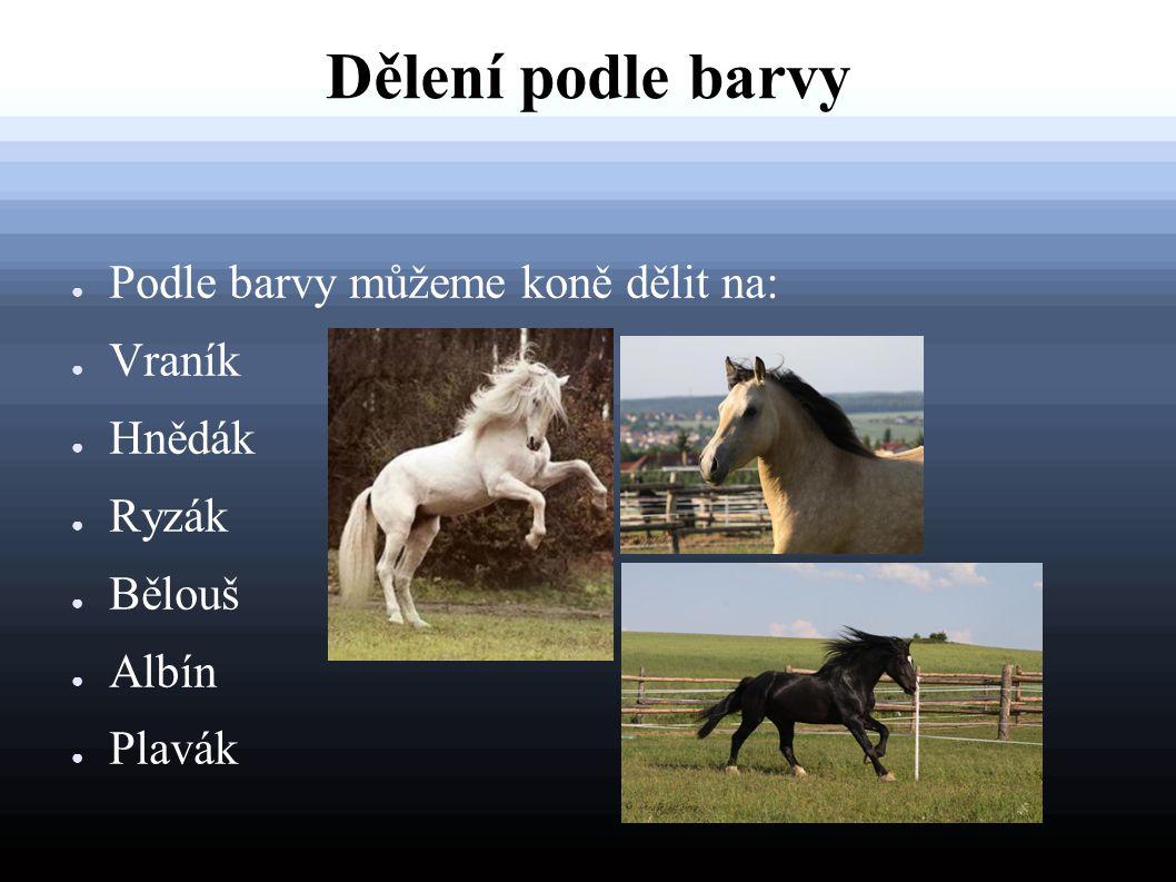 Dělení podle barvy ● Podle barvy můžeme koně dělit na: ● Vraník ● Hnědák ● Ryzák ● Bělouš ● Albín ● Plavák