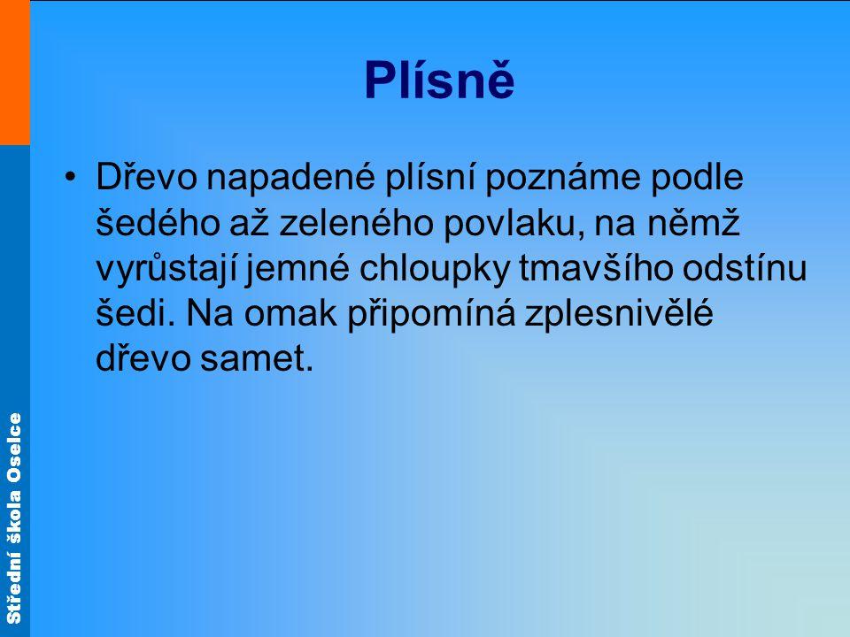 Střední škola Oselce Plísně Dřevo napadené plísní poznáme podle šedého až zeleného povlaku, na němž vyrůstají jemné chloupky tmavšího odstínu šedi. Na