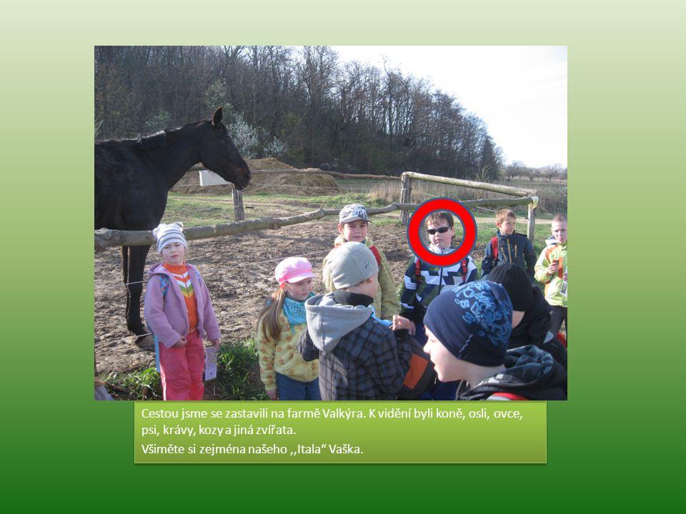 """Cestou jsme se zastavili na farmě Valkýra. K vidění byli koně, osli, ovce, psi, krávy, kozy a jiná zvířata. Všiměte si zejména našeho,,Itala"""" Vaška. C"""