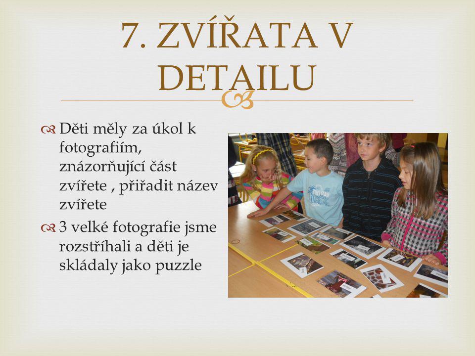  7. ZVÍŘATA V DETAILU  Děti měly za úkol k fotografiím, znázorňující část zvířete, přiřadit název zvířete  3 velké fotografie jsme rozstříhali a dě