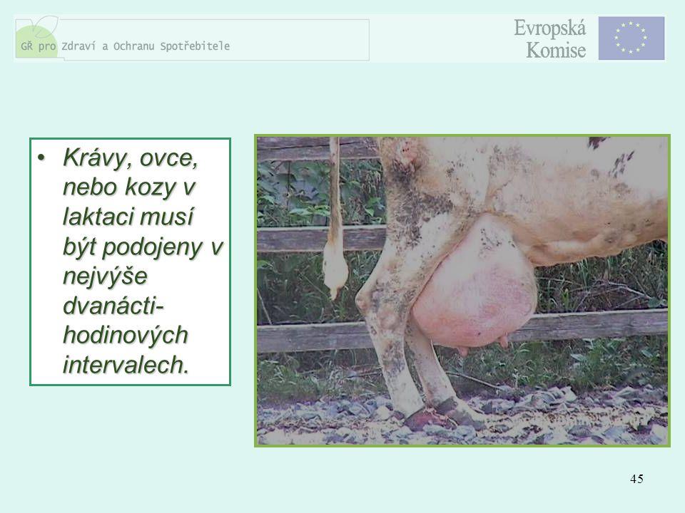 45 Krávy, ovce, nebo kozy v laktaci musí být podojeny v nejvýše dvanácti- hodinových intervalech.Krávy, ovce, nebo kozy v laktaci musí být podojeny v