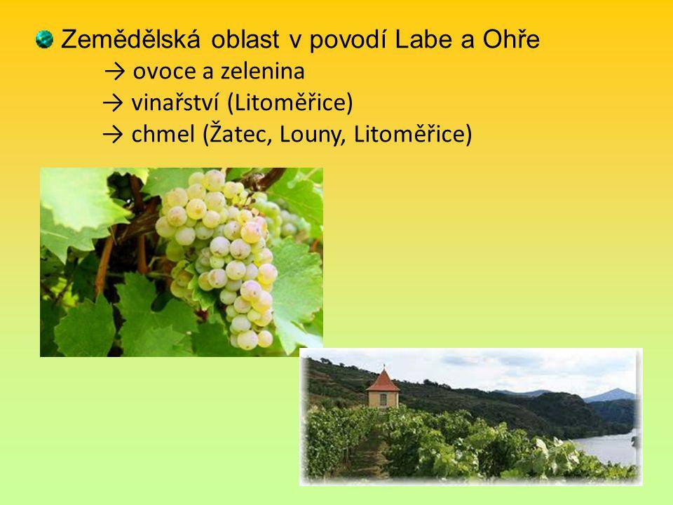 Zemědělská oblast v povodí Labe a Ohře → ovoce a zelenina → vinařství (Litoměřice) → chmel (Žatec, Louny, Litoměřice)