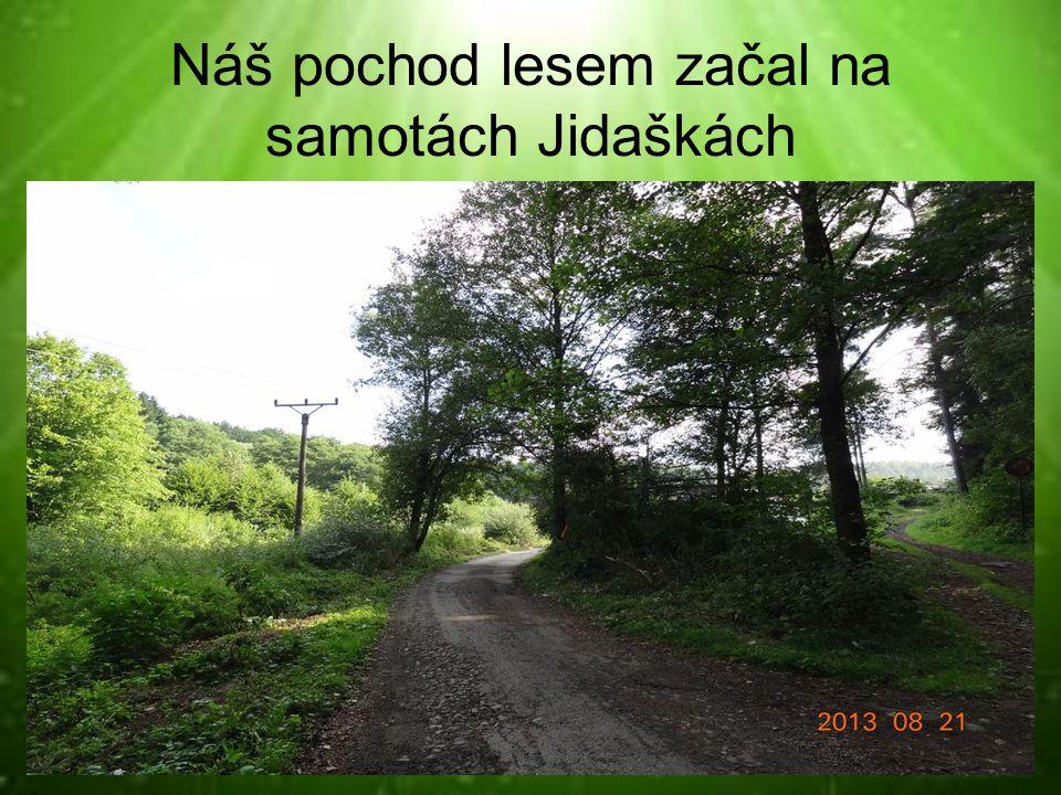 Náš pochod lesem začal na samotách Jidaškách