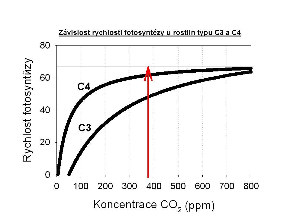 Závislost rychlosti fotosyntézy u rostlin typu C3 a C4