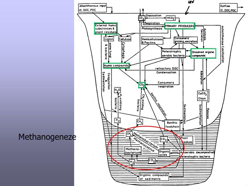 Methanogeneze