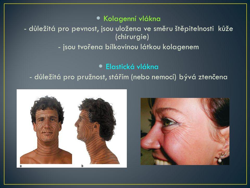 Kolagenní vlákna - důležitá pro pevnost, jsou uložena ve směru štěpitelnosti kůže (chirurgie) - jsou tvořena bílkovinou látkou kolagenem Elastická vlákna - důležitá pro pružnost, stářím (nebo nemocí) bývá ztenčena