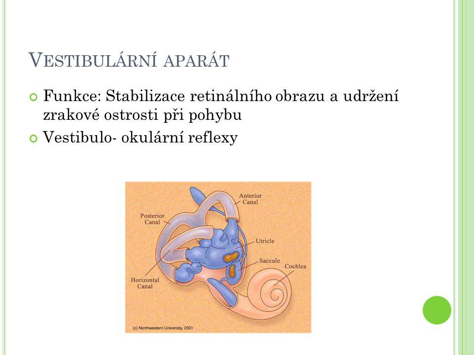 V ESTIBULÁRNÍ APARÁT Funkce: Stabilizace retinálního obrazu a udržení zrakové ostrosti při pohybu Vestibulo- okulární reflexy