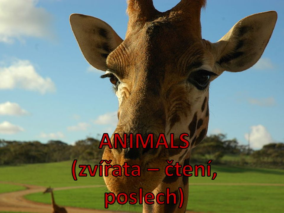 1.Write 3 animals that you heard.2.What´s his pet.