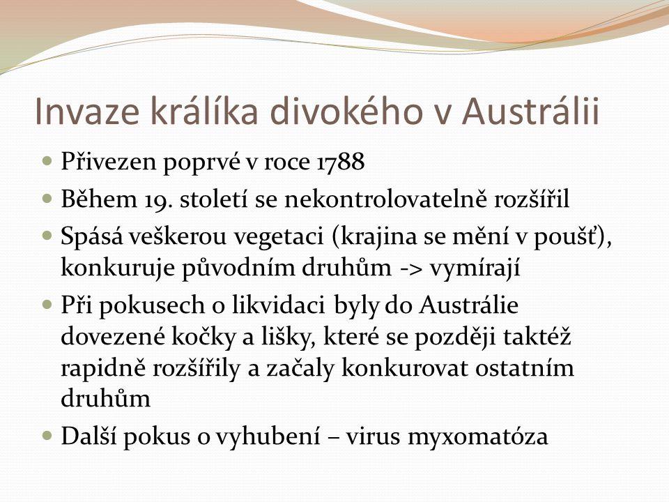 Přivezen poprvé v roce 1788 Během 19.