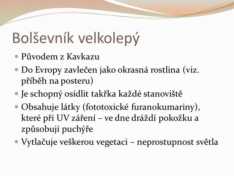 Původem z Kavkazu Do Evropy zavlečen jako okrasná rostlina (viz.