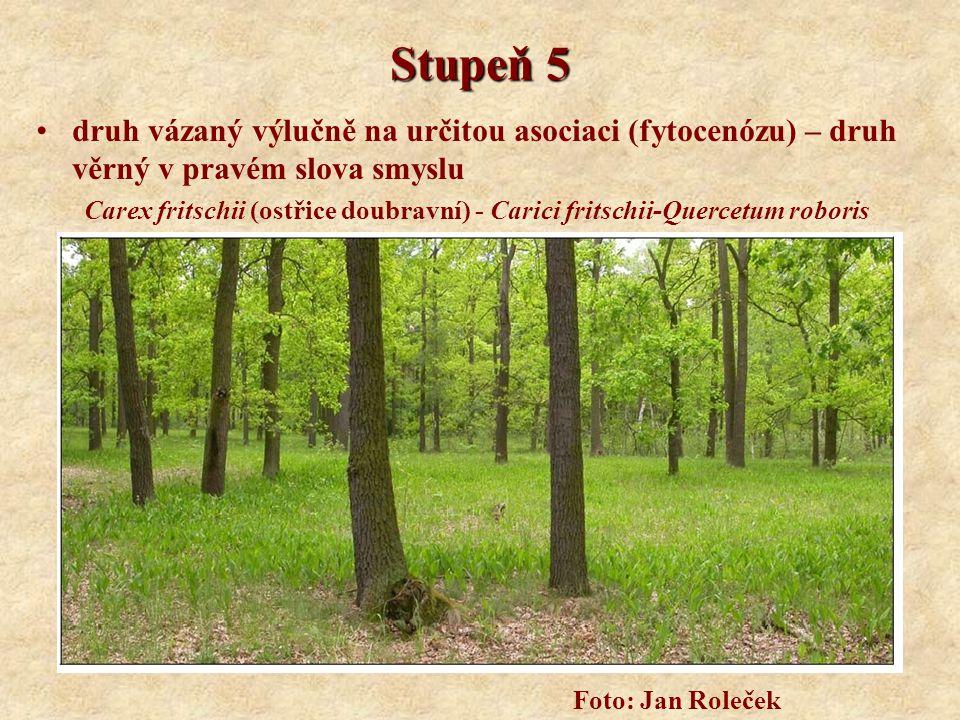 Stupeň 5 druh vázaný výlučně na určitou asociaci (fytocenózu) – druh věrný v pravém slova smyslu Carex fritschii (ostřice doubravní) - Carici fritschi