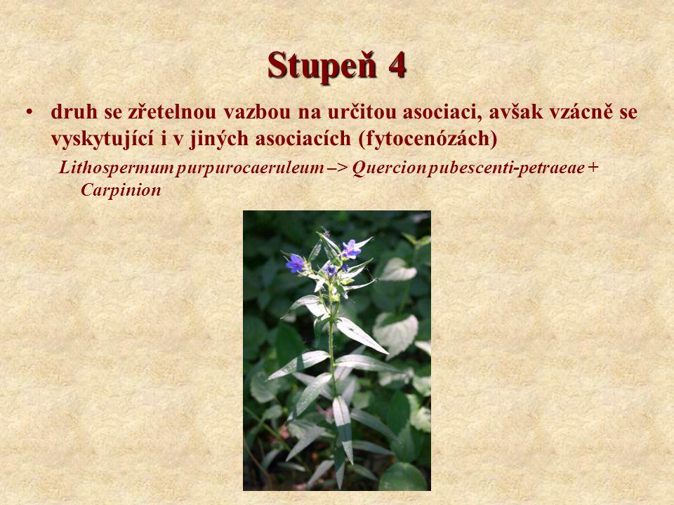 Stupeň 4 druh se zřetelnou vazbou na určitou asociaci, avšak vzácně se vyskytující i v jiných asociacích (fytocenózách) Lithospermum purpurocaeruleum