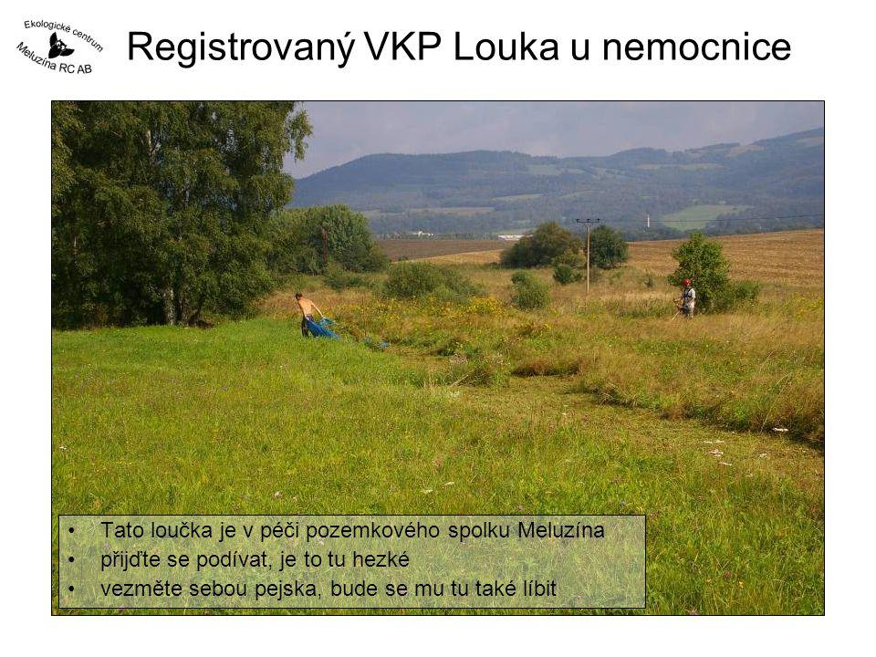 Registrovaný VKP Louka u nemocnice Tato loučka je v péči pozemkového spolku Meluzína přijďte se podívat, je to tu hezké vezměte sebou pejska, bude se mu tu také líbit