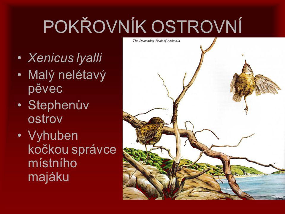 POKŘOVNÍK OSTROVNÍ Xenicus lyalli Malý nelétavý pěvec Stephenův ostrov Vyhuben kočkou správce místního majáku