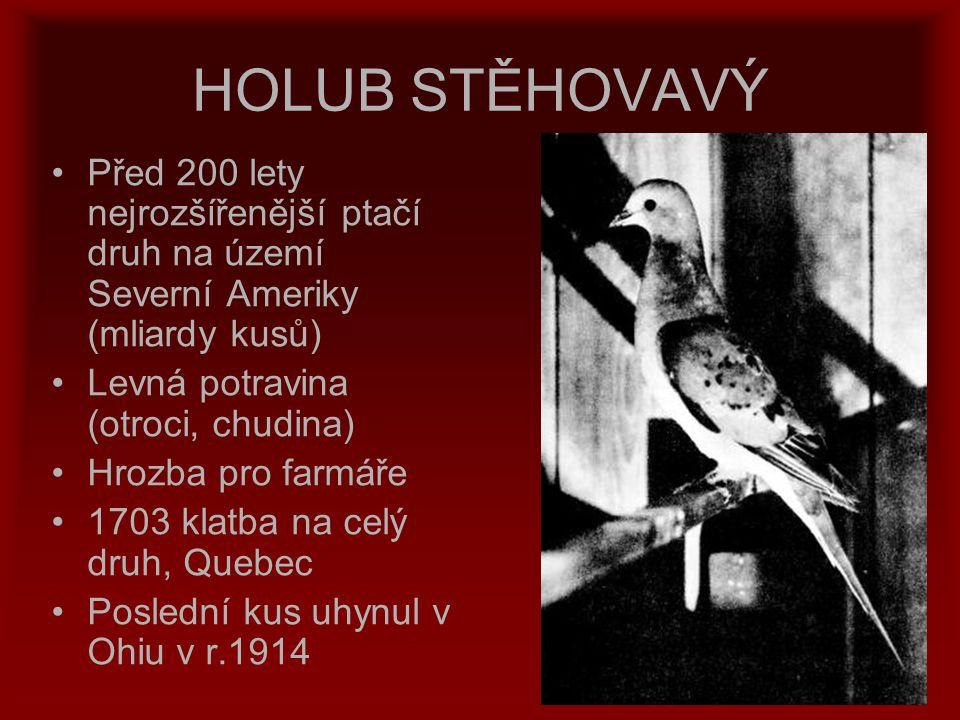 HOLUB STĚHOVAVÝ Před 200 lety nejrozšířenější ptačí druh na území Severní Ameriky (mliardy kusů) Levná potravina (otroci, chudina) Hrozba pro farmáře