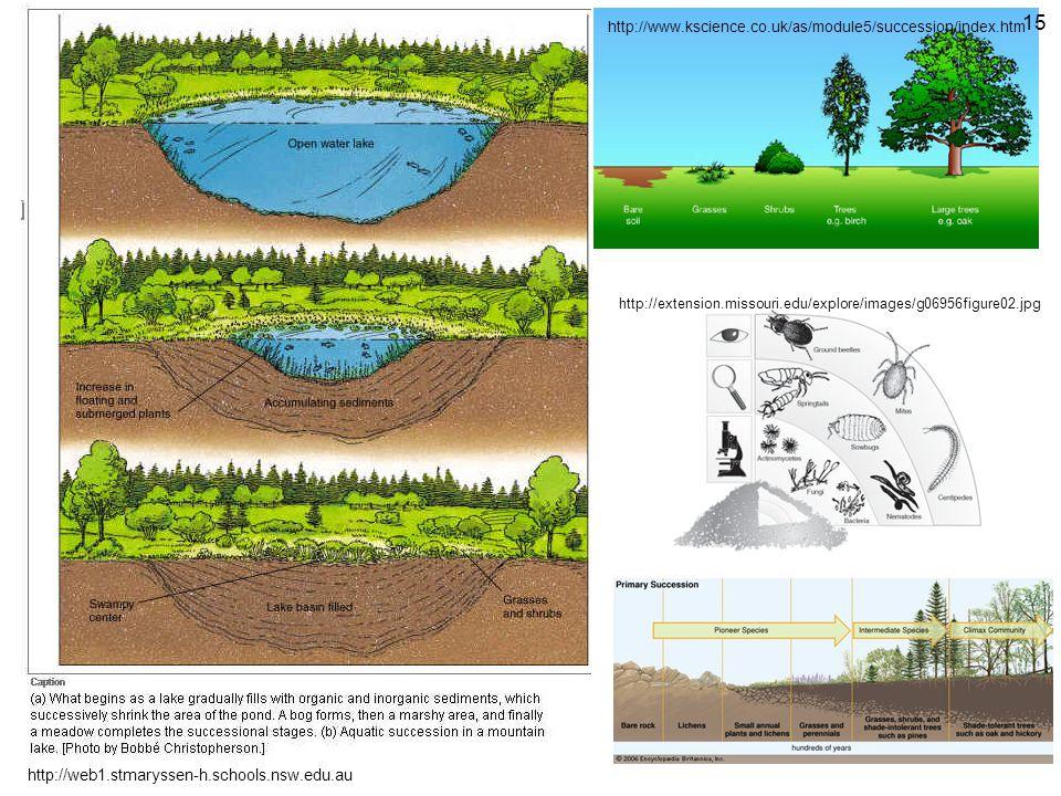 http://web1.stmaryssen-h.schools.nsw.edu.au http://www.kscience.co.uk/as/module5/succession/index.htm http://extension.missouri.edu/explore/images/g06956figure02.jpg 15