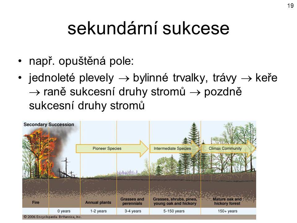 sekundární sukcese např. opuštěná pole: jednoleté plevely  bylinné trvalky, trávy  keře  raně sukcesní druhy stromů  pozdně sukcesní druhy stromů