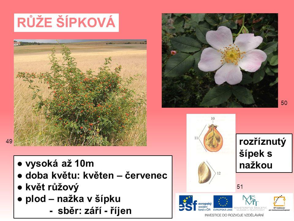 RŮŽE ŠÍPKOVÁ ● vysoká až 10m ● doba květu: květen – červenec ● květ růžový ● plod – nažka v šípku - sběr: září - říjen rozříznutý šípek s nažkou 51 50 49