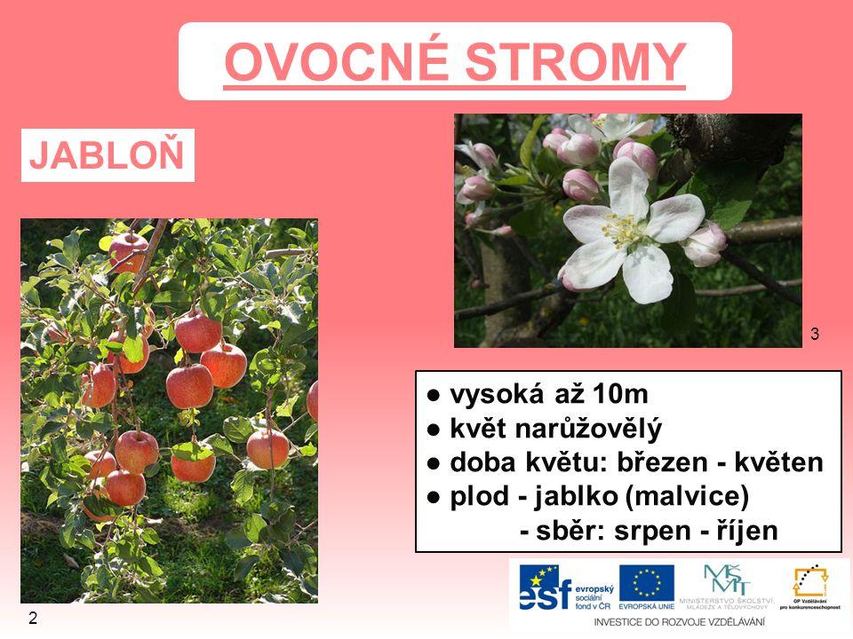 OVOCNÉ STROMY JABLOŇ ● vysoká až 10m ● květ narůžovělý ● doba květu: březen - květen ● plod - jablko (malvice) - sběr: srpen - říjen 3 2