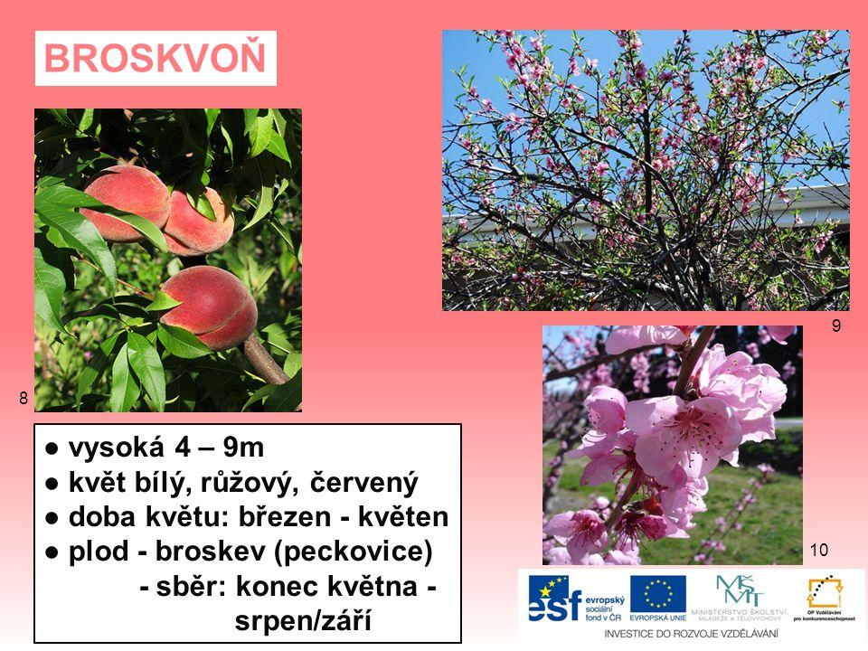 BROSKVOŇ ● vysoká 4 – 9m ● květ bílý, růžový, červený ● doba květu: březen - květen ● plod - broskev (peckovice) - sběr: konec května - srpen/září 8 9 10
