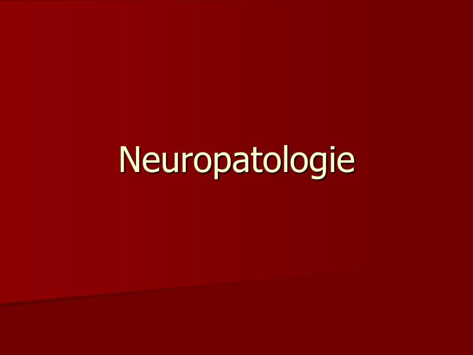 Vrozené vady CNS Chybné uzavření neurální trubice: Chybné uzavření neurální trubice: –Anencefalie –Spina biffida aperta, occulta, cystica – meningokéle, meningomyelokéle Kongenitální hydrocefalus (+sy Dandy-Walker, sy Arnold-Chiari) Kongenitální hydrocefalus (+sy Dandy-Walker, sy Arnold-Chiari) Syringomyelie (projevuje se až v dospělosti) Syringomyelie (projevuje se až v dospělosti) Nádorové syndromy – neurofibromatóza, tuberózní skleróza, Von Hippel-Lindau, sy Sturge-Weber Nádorové syndromy – neurofibromatóza, tuberózní skleróza, Von Hippel-Lindau, sy Sturge-Weber