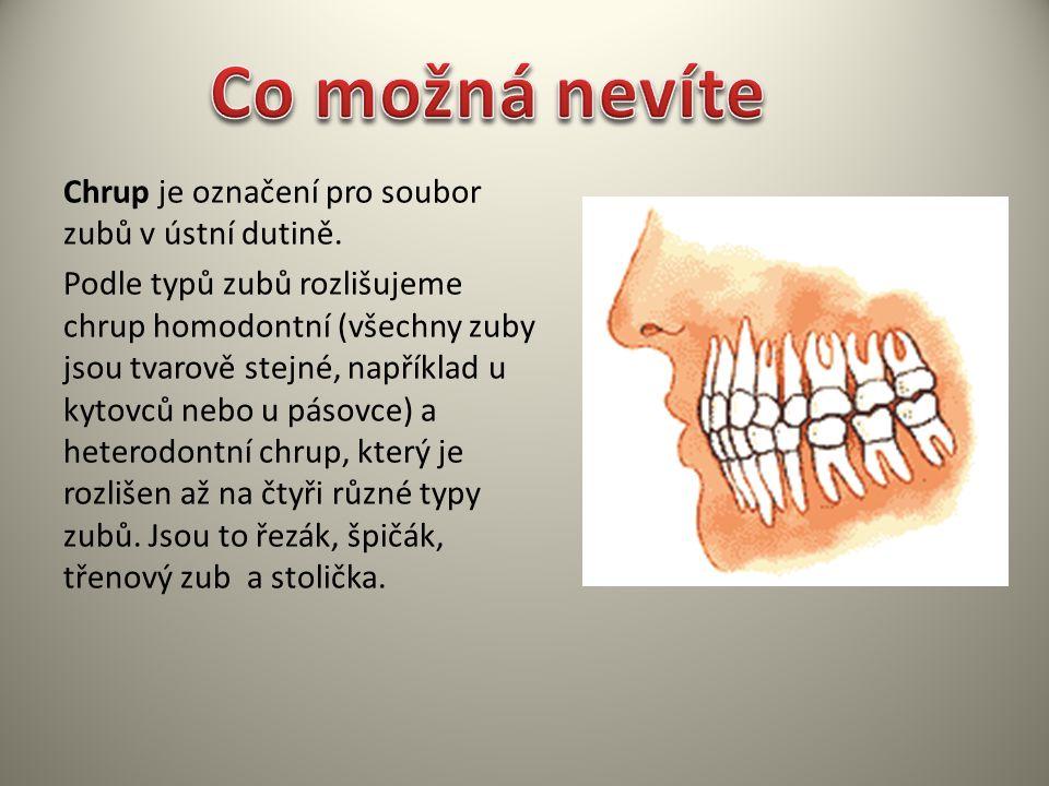 Chrup je označení pro soubor zubů v ústní dutině. Podle typů zubů rozlišujeme chrup homodontní (všechny zuby jsou tvarově stejné, například u kytovců