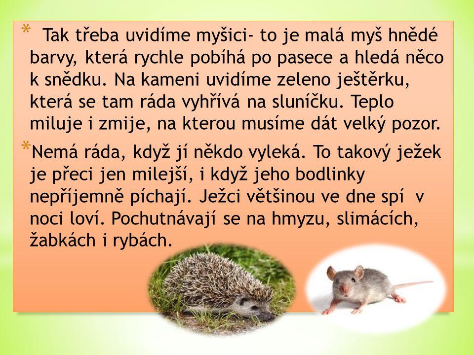 * Tak třeba uvidíme myšici- to je malá myš hnědé barvy, která rychle pobíhá po pasece a hledá něco k snědku. Na kameni uvidíme zeleno ještěrku, která