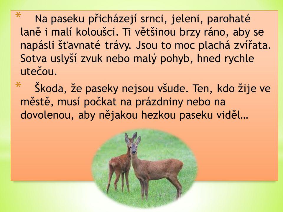 * Na paseku přicházejí srnci, jeleni, parohaté laně i malí koloušci. Ti většinou brzy ráno, aby se napásli šťavnaté trávy. Jsou to moc plachá zvířata.