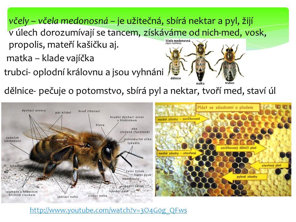 včely – včela medonosná – je užitečná, sbírá nektar a pyl, žijí v úlech dorozumívají se tancem, získáváme od nich-med, vosk, propolis, mateří kašičku