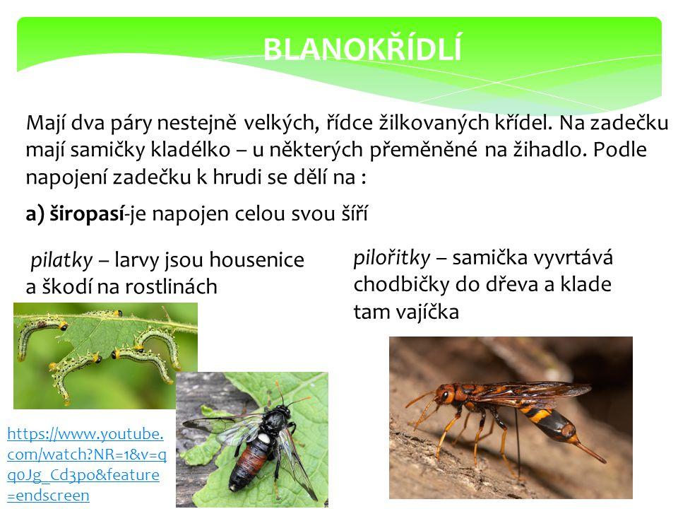 b) štíhlopasí – zadeček je připojen tenkou stopkou žlabatky – larvy tvoří na listech hálky ( na dubu duběnky) lumci – samičky nabodávají kladélkem larvy jiného hmyzu a klade tam vajíčka https://www.youtub e.com/watch?v=9v5K UW8jNnk