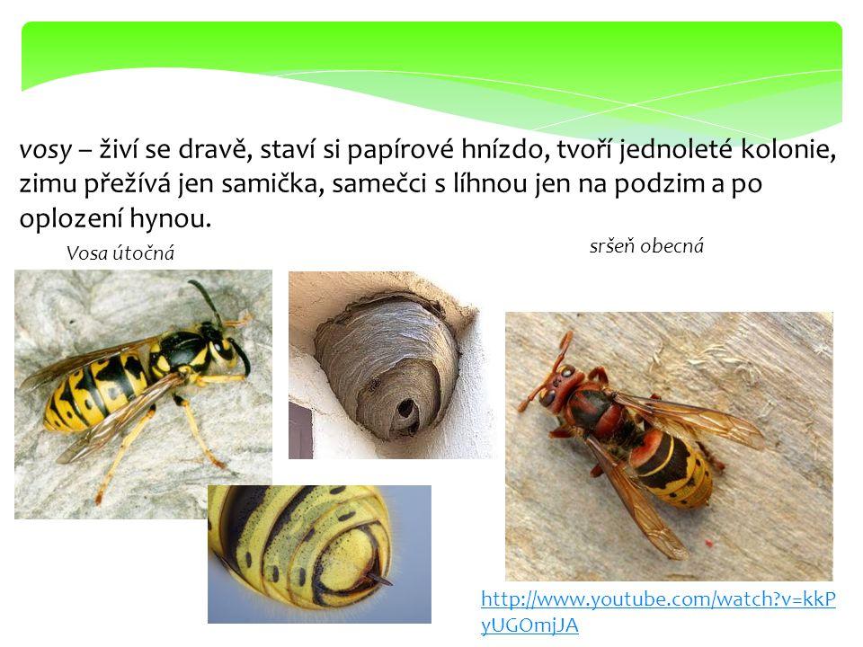 čmeláci – mají podobný životní cyklus, živí se nektarem, opylují rostliny