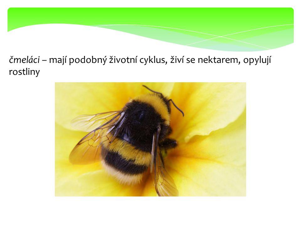 včely – včela medonosná – je užitečná, sbírá nektar a pyl, žijí v úlech dorozumívají se tancem, získáváme od nich-med, vosk, propolis, mateří kašičku aj.