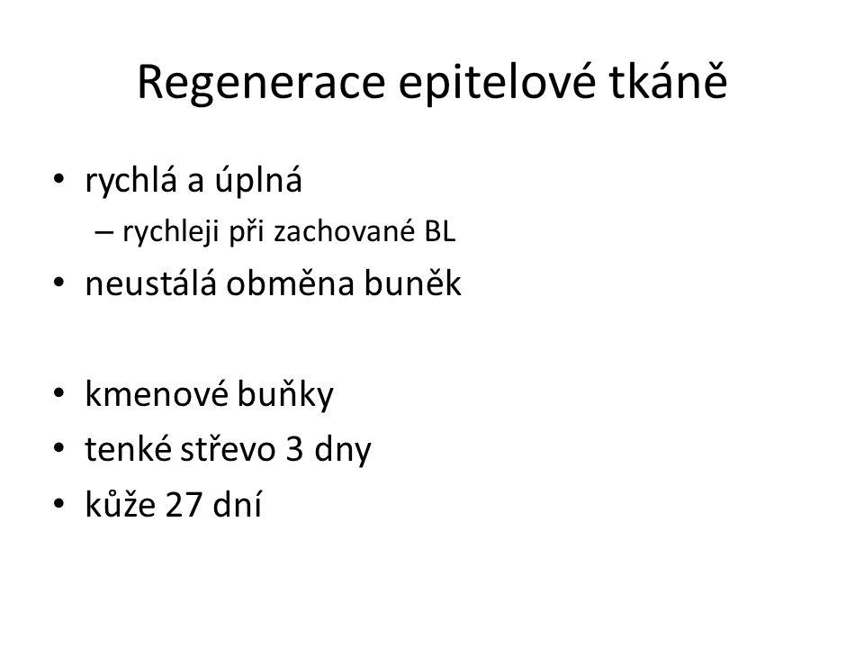Regenerace epitelové tkáně rychlá a úplná – rychleji při zachované BL neustálá obměna buněk kmenové buňky tenké střevo 3 dny kůže 27 dní