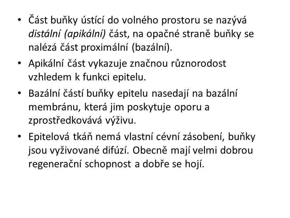http://cellbio.utmb.edu/microanatomy/#Epith elia
