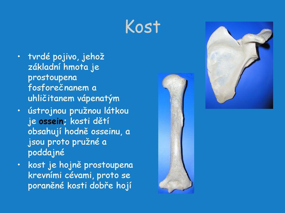 Kost tvrdé pojivo, jehož základní hmota je prostoupena fosforečnanem a uhličitanem vápenatým ústrojnou pružnou látkou je ossein; kosti dětí obsahují h