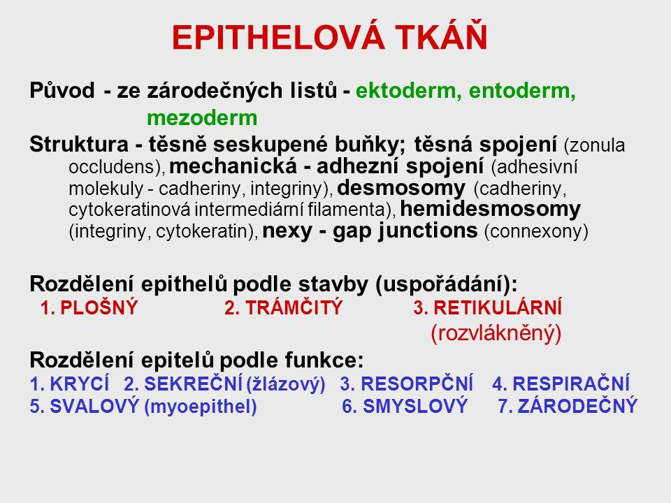EPITHELOVÁ TKÁŇ Původ - ze zárodečných listů - ektoderm, entoderm, mezoderm Struktura - těsně seskupené buňky; těsná spojení (zonula occludens), mecha