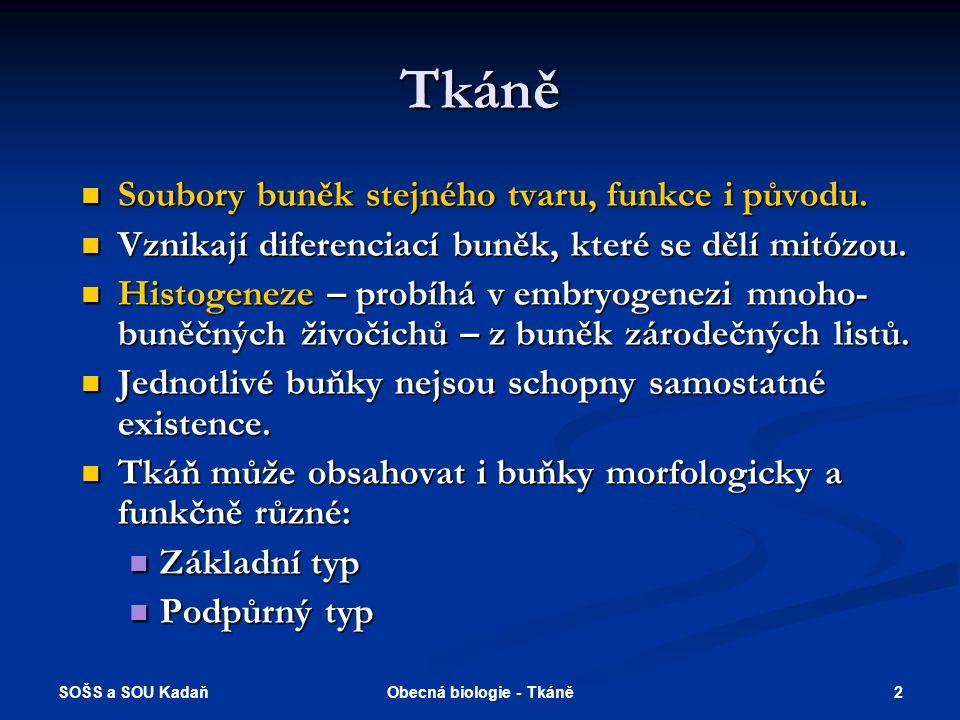 SOŠS a SOU Kadaň 12Obecná biologie - Tkáně Dělení epitelů podle funkce Krycí – ochranná vrstva.