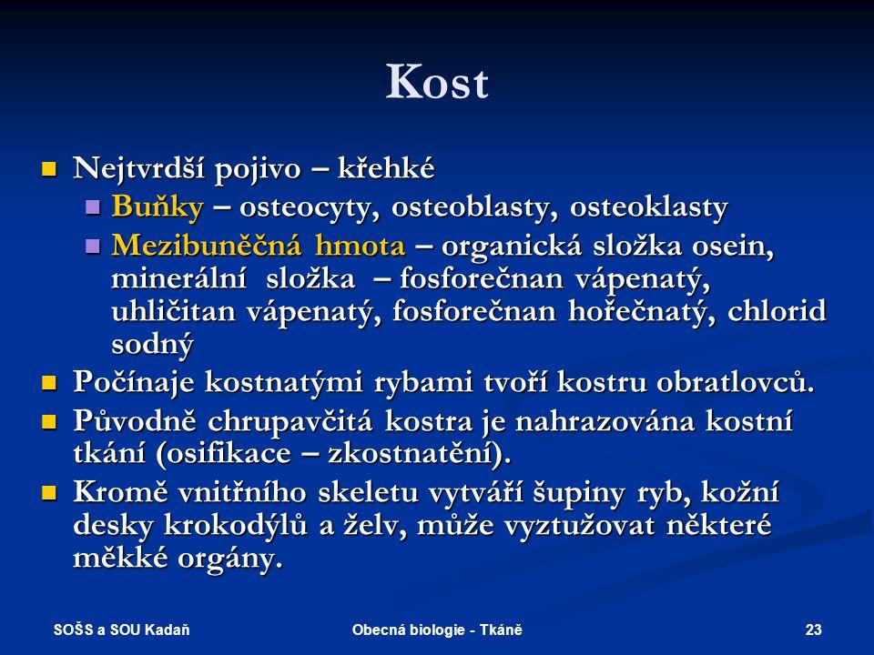 SOŠS a SOU Kadaň 22Obecná biologie - Tkáně Chrupavka Vazivová chrupavka meziobratlové ploténky, čéška, kloubní plošky méně chondrocytů i interfibrilární hmoty, hojnost kolagenních vláken