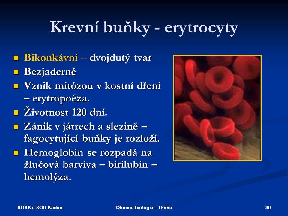 SOŠS a SOU Kadaň 29Obecná biologie - Tkáně Krevní plazma Průhledná nažloutlá kapalina bez krevních tělísek.